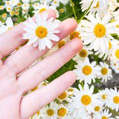"""Con la palabra """"margarita"""" no nos referimos a un solo tipo de flor, sino que es un término genérico. Comprende un total de 42 variedades diferentes que a menudo reciben nombres locales.El nombre botánico de margarita (Leucanthemum) proviene del griego y significa """"flor blanca"""", pero las margaritas no necesariamente tienen que mostrar pétalos blancos, también pueden ser de color amarillo, rosa o morado, entre otros.Características generales de la margaritaEn la naturaleza, las margaritas a… Playground Flooring, Diy Playground, Brick Patterns Patio, Cottage Garden Design, Balcony Design, Plantar, Diy Planters, Covent Garden, Better Homes And Gardens"""