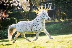 Spotty in de zon