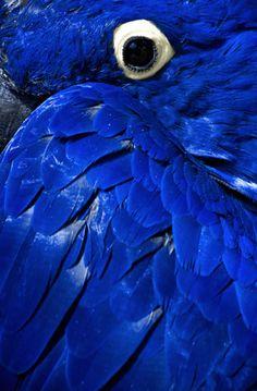 "Mug shot for Craig Buckner and his macaw, ""Bird. – A macaw named ""Bird"" is an instant Pretty Birds, Beautiful Birds, Animals Beautiful, Cute Animals, Vida Animal, Mundo Animal, Tier Fotos, Exotic Birds, Tropical Birds"