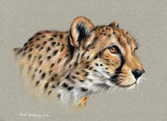 Finished it! Here is the completed cheetah drawing for you to see.  Caran D'Ache supracolor soft colour pencils on toned strathmore 400 series paper.  Www.sarahstribblingwildlifeart.com  #artoftheday #realism #art #artwork #art_empire #artfido #artspotlight #justartspiration #art_spotlight #art_empire #artifeature #artshare #iglobalpics #artfido #artistic_share #artistic_nation #art_gallery #arts_gallery #arts_help #artdraw #artsupporting #artworksfever #dailyartistiq #cheetah #pencildrawing…