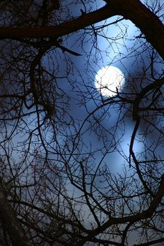 Dark woods on a stormy night match the setting at the beginning of act 1 with the three witches appearing to talk about Macbeth. Memes Arte, Mystic Moon, Shoot The Moon, Moon Pictures, Moon Photography, Good Night Moon, Moon Magic, Beautiful Moon, Moon Art
