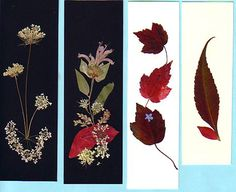 pressed flower cards and pressed flower bookmarks