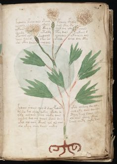 Mysterious Voynich Manuscript
