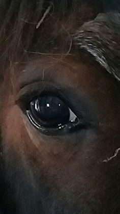 Lord's eye