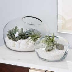 Green house effect. With its concrete base and simple, stylish design, this glass House Terrarium is great for arranging your succulents, ferns and small flowers. Cactus Terrarium, Glass Terrarium, Succulent Gardening, Planting Succulents, Organic Gardening, House Plants Decor, Plant Decor, Glass Planter, Planters