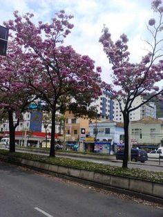 Rio Branco avenue - Juiz de Fora, Brazil #spring