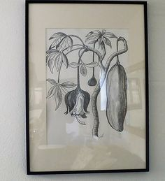 Fruit and flower. Pencil Drawings, Painting & Drawing, African, Paintings, Fruit, Flowers, Paint, Painting Art, Painting