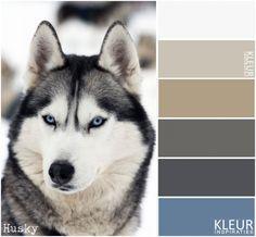 HUSKY - Kleurenpalet bruin, grijs en blauw
