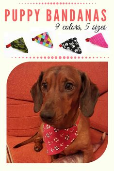 Trendy dachshound with his summer bandana! This dog looks more stylish than me. Presents For Dog Lovers, Gifts For Dog Owners, Dog Lover Gifts, Dog Accesories, Puppy Bandana, Puppy Coats, Puppy Drawing, Dog Heaven, Cute Funny Dogs