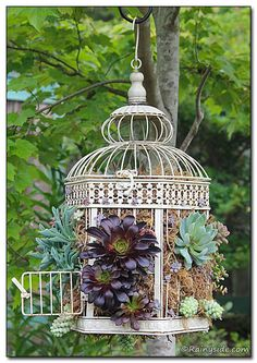 Bird Cages and Succulents  ~  Heres a crafty, container DIY that is fun to do. Take a decorative hinged bird cage, line it with moss, plant it with succulents—hang and enjoy.