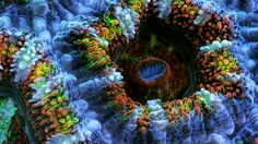 Slow Life: Hypnotizing Macro Timelapse Of Exotic Corals Made With 150,000 Photos | Bored Panda
