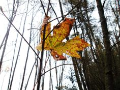 Clinging to Autumn by Rose on Etsy