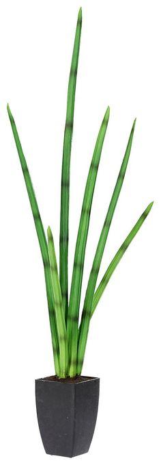 Artikeldetails:  Täuschend echte Sanseveria, Bestehend aus 5 oder 6 Blättern, Ca. 80 cm hoch oder 100 cm,  Material/Qualität:  Kunststoff, Topf aus Kunststoff,  ...