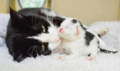 This is a mother's love  pic.twitter.com/8HeMqt4Ixz