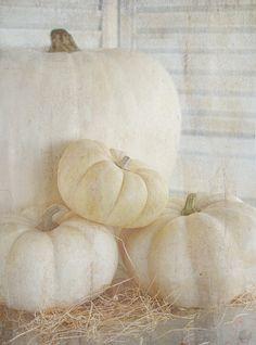 White pumpkins #white