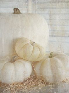 White pumpkins.