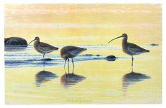 Litografier-arkiv - Lars Jonsson Illustration Art, Wildlife, Museum, Birds, Nature, Inspirational, Paintings, Animals, Image