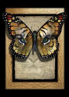 farfalla monarca bitcoin trading bitcoin etoro