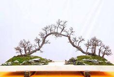 BRAINALIZE — Lingnan #bonsai style, a Penjing bridge. Photo by...