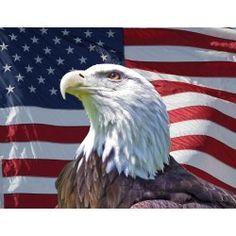 182 Best Patriotic Eagles Images On Pinterest Us Flags
