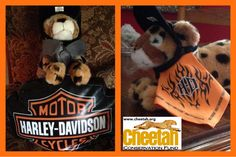 Follow along as the Purring Cheetahs travel the world and add photos of your own Cheetah adventures to join the fun!    www.facebook.com/chewbaakascheetahfriends  #chewbaakascheetahfriends  Cheetah Conservation Fund  www.cheetah.org  Biker cheetah Harley Davidson