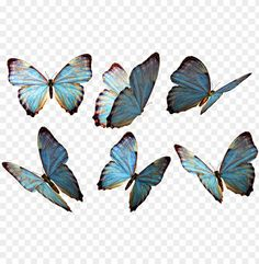 free PNG hotoshop clipart beautiful butterfly - flying butterfly PNG image with transparent background PNG images transparent Butterfly Clip Art, Butterfly Drawing, Butterfly Crafts, Butterfly Design, Picsart Png, Image Transparent, Transparent Overlays, Logo Image, Butterfly Wallpaper Iphone