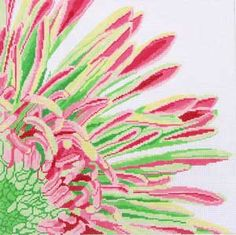 Pink and Green Fringed Mum