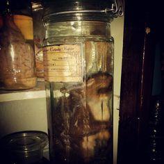 Squirrel wet specimen  Available at Wunderkammer Curiosity Shoppe Tacoma Wa