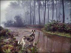 Guillermo Caballa est un photographe de talent basé à Vigo, en Espagne, qui aime prendre de belles photos dans les forêts de la Galice, accompagné de son chien Malu. Les photos de caballa ont attiré notre attention, non seulement pour leur beauté enchanteresse, mais également pour leur ambiance typiquement introspective.