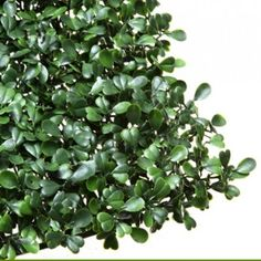 Artificial Boxwood Hedge Tiles