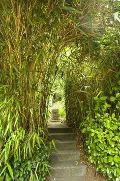 Bamboo could be replaced with Salix here in the north.