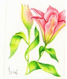 Small original drawing of a pink lily por deLiriosArt en Etsy