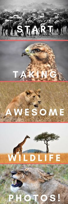 Ever wanted to take awesome photos of animals on your wildlife or safari holiday? Photos you can wow your friends with. Photos that show the animals personality and behaviours? Follow these super easy tips to make your landscape photography awesome! #photography