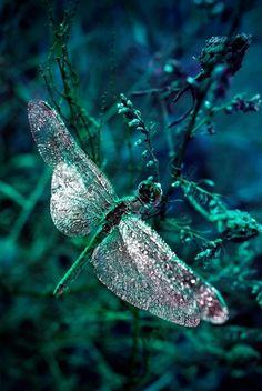 dragonfly fairy tale enchanting magical glitter sparkle