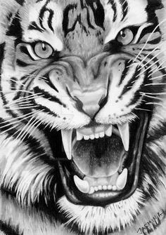 Angry Tiger Art Print by StarArt Gonzalez - X-Small Tiger Face Drawing, Tiger Face Tattoo, Tiger Tattoo Design, Tiger Sketch, Face Sketch, Drawing Sketches, Portrait Sketches, Sketch Art, Roaring Lion Drawing