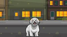 A Lovely Bichon Frise Dog With Blocks Of Neighboring Apartment Buildings Background:  A cute furry white dog with brown nose and eyes looks ahead while parting its lips to show a pink tongue and A block of residential buildings with multicolored facade lighted rooms green glass windows gray road and pavement during a starry night