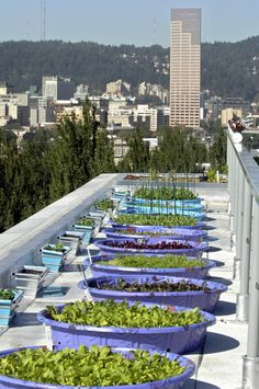 Roof-top pool gardens:     fill a wading pool with vermiculite or gravel to 2 to 4 inches and top with soil mixture. Then drill holes through the sides where the vermiculite ends and soil starts. Water is added to the point it begins to just trickle out the holes. Roots reach down and suck up the water. The technique takes less water, time and equipment than overhead or drip irrigation.