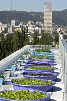 Roof-top pool gardens