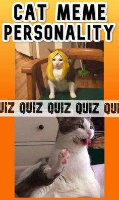 You've never seen a quiz like this! Select cat meme pictures and learn something new about your personality! Make sure to check this one out, because this is really funny! Random Quizzes, Smash Or Pass, Personality Quizzes, Trivia Questions, Mini Games, Funny Cat Pictures, Cat Memes, Really Funny, Funny Cats