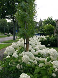 Mooie voortuin planten