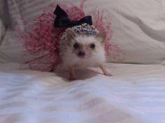 Lily's rock star tutu by cozyhedgiebags on Etsy, $4.50