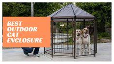 Best Outdoor Cat Enclosure Outdoor Cat Enclosure, Cat Tent, Pet Kennels, Outdoor Cats, Dog Crate, Cool Cats, Fur Babies, Your Pet, Puppies