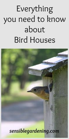 Everything you need to know about Bird Houses with Sensible Gardening
