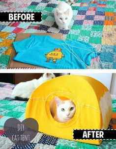 An old t-shirt and hangers and you create a cat tent!