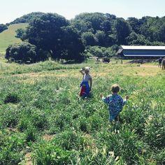 #farm dayz 1/3 #citykids gettin' their on @sonomacountyfarmtrails by mbarczak