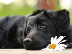 The dog and the flower (Canis Lupus familiaris)