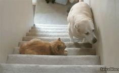 Don't disturb the cat, don't disturb the cat…
