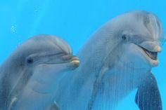 twee grappige dolfijnen