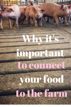 Why it's Important to Connect Your Food to the Farm - What I learned about the pork industry from a visit with an Ohio pork farmer and how you can set up a virtual field trip for your child's classroom. AD #ohpork