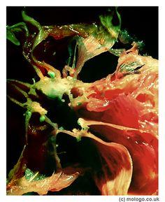 grapefruit | Flickr - Photo Sharing!